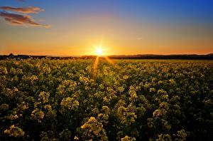 Fotos Sonnenaufgänge und Sonnenuntergänge Felder Himmel Lichtstrahl Horizont Sonne Natur