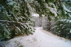 Fotos Jahreszeiten Winter Schnee Ast Bäume Natur