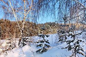 Fotos Jahreszeiten Winter Schnee Bäume Ast Birken Natur