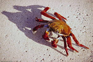Fotos Gliederfüßer Krabben - Tiere