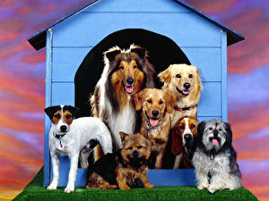 Hintergrundbilder Hunde Collie Basset Hound Jack Russell Terrier