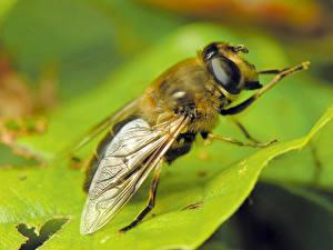 Bilder Insekten Fliegen